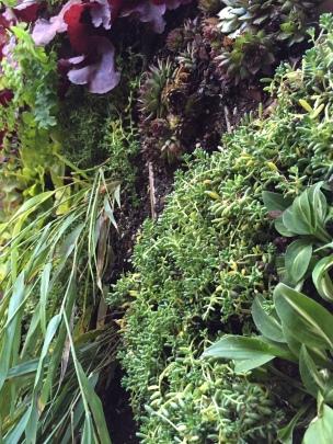 Succulents add detail