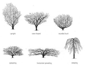 Shrub forms